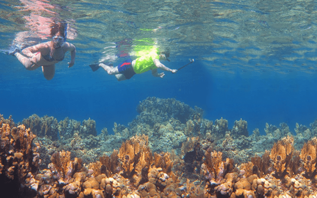 Paseo Snorkeling